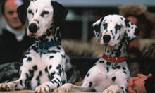 102 Dalmatians Photo 5