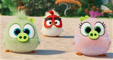 Angry Birds : Le film 2 Photo 7