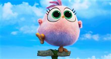 Angry Birds : Le film 2 Photo 33