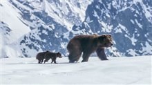 Bears Photo 2