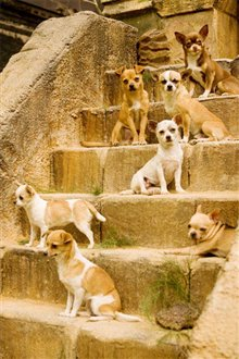 Beverly Hills Chihuahua Photo 18