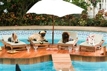 Beverly Hills Chihuahua Photo 12