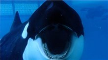 Blackfish photo 1 of 4