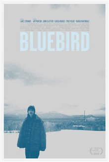 Bluebird Photo 1 - Large