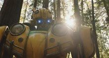 Bumblebee Photo 27