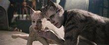Cats (v.f.) Photo 15