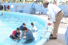 Dolphin Tale photo 22 of 32