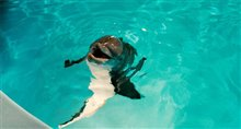Dolphin Tale Photo 28