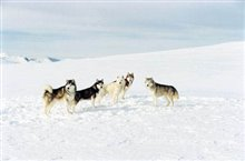 Eight Below Photo 7