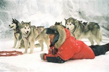 Eight Below Photo 12