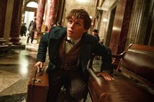 Fantastic Beasts and Where to Find Them Photo 2