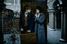 Fantastic Beasts and Where to Find Them photo 4 of 63