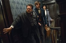 Fantastic Beasts and Where to Find Them photo 10 of 63