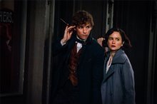 Fantastic Beasts and Where to Find Them photo 14 of 63