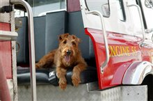 Firehouse Dog photo 2 of 10