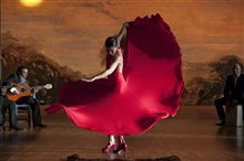 Flamenco, Flamenco Photo 20