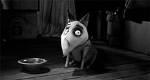 Frankenweenie Photo 8