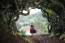 Into the Woods Photo 12