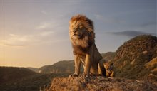 Le roi lion Photo 4