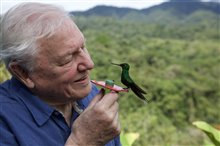 Life in Color with David Attenborough (Netflix) Photo 4