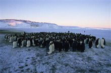 March of the Penguins Photo 4