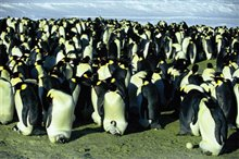 March of the Penguins Photo 6