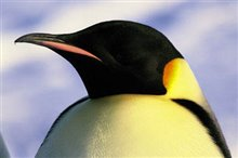 March of the Penguins Photo 10
