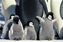 March of the Penguins Photo 14