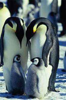 March of the Penguins Photo 18