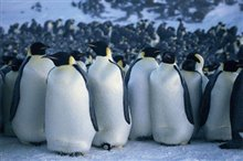 March of the Penguins Photo 8