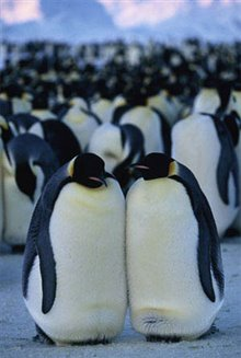 March of the Penguins Photo 17
