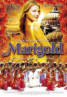 Marigold Photo 9