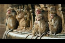 Monkey Kingdom Photo 5