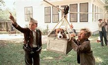 My Dog Skip Photo 7