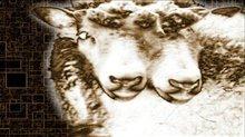 Naqoyqatsi Photo 4