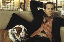 National Lampoon's Van Wilder Photo 2 - Large