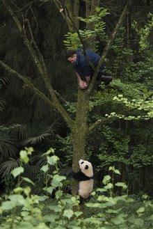 Pandas Photo 24