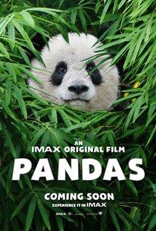 Pandas Photo 32