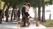Par amour des chiens Photo 2