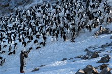 Penguins Photo 18