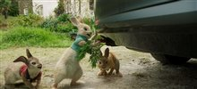 Peter Rabbit Photo 7