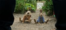 Peter Rabbit Photo 19