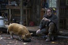 Pig Photo 2