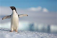 Pingouins Photo 1