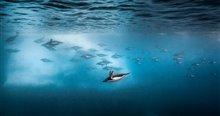 Pingouins Photo 3