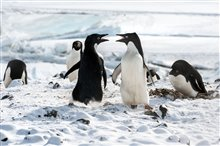 Pingouins Photo 8