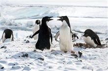 Pingouins Photo 8