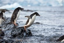 Pingouins Photo 12