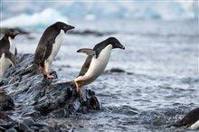 Pingouins Photo 12