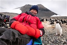 Pingouins Photo 14